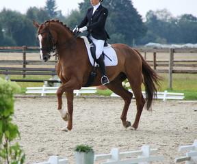 Pferdesport Kür Turnier Dressur