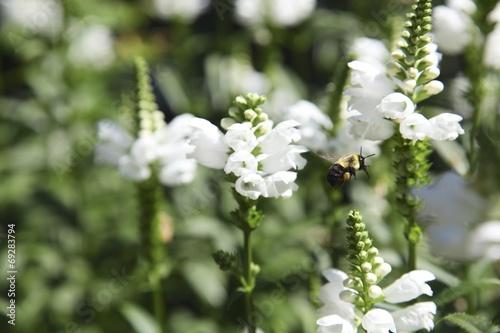 canvas print picture Abeille sur une fleur