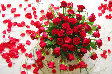 Red roses_1