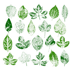 Paint stamps of different leaves set