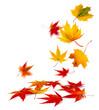 Leinwanddruck Bild - buntes Herbstlaub vor weißem Hintergrund