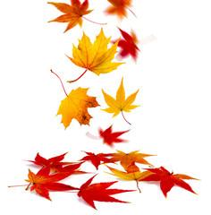 bunte Blätter vor weißem Hintergrund