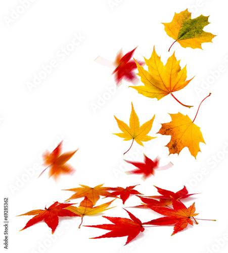 Leinwanddruck Bild buntes Herbstlaub vor weißem Hintergrund