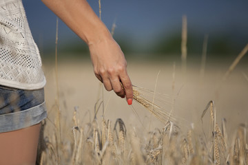 Woman hand with corn at a corn field
