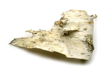 Betula Bouleau blanc Betulla Birken Brzoza Берёза Berk Birch