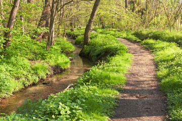 Waldbach mit Wanderweg im Frühling in Schleswig-Holstein
