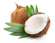 Coconut with palm leaves - 69294969