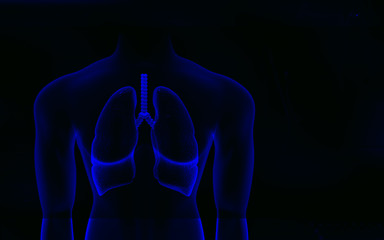 Human body and lungs