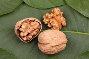 Walnuts lying on the leaf
