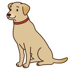 犬 レトリバー 盲導犬