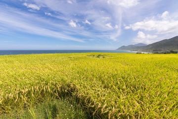 Paddy terrace farm near the sea