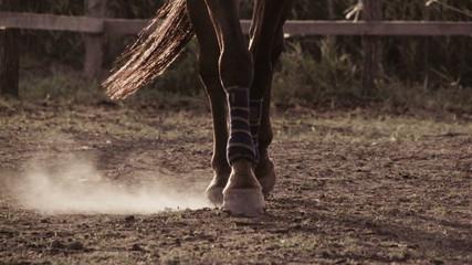 Horse wearing leg bandages
