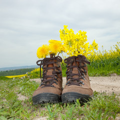 Hiking boots with flowers in nature