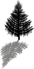 large fir with shadow isolated on white