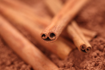 Cinnamon sticks on cocoa powder