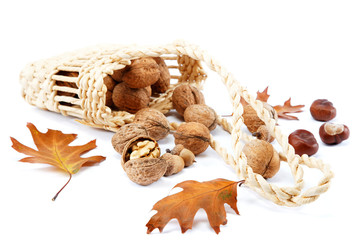 Walnuts in a basket and oak leaves with acorns.