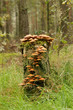 Tree trunk covered with mushrooms