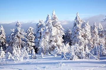 Winterwald 573