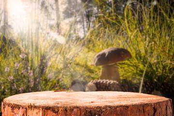 Background forest mushroom tree stumps