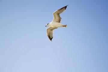 Uçan Kuş, Gökyüzü