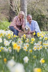 Portrait of smiling senior couple with dog in sunny daffodil field