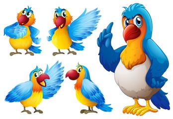 Parrot set