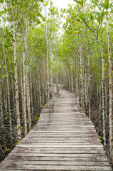 Wood path way among the Mangrove forest, Thailand