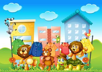 Animals and laundry
