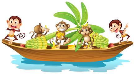 Monkey on boat