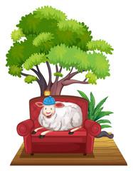 Sheep on sofa