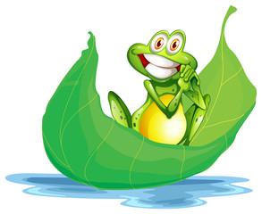 A smiling frog on the big leaf