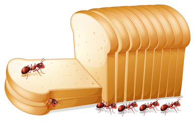 Bread and ants