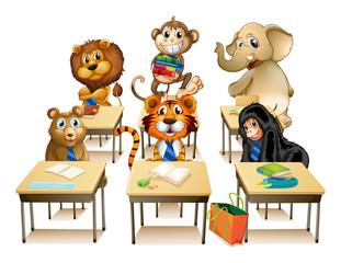 Animals in classroom