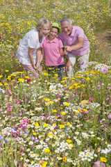 Smiling grandparents and granddaughter standing among wildflowers in sunny meadow