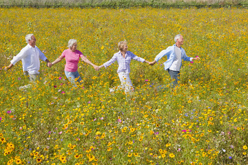 Smiling couples holding hands and walking among wildflowers in sunny meadow