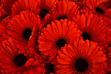 A bouquet of gerberas. Floral background.