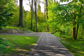 Footpath in spring park.
