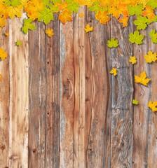 Holz Blätter Herbst