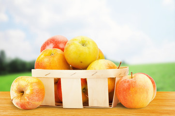 Fresh and colorful apples in basket