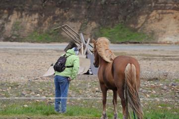 cheval islandais et touriste