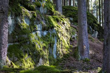Waldlichtung mit vermoosten Granitfelsen