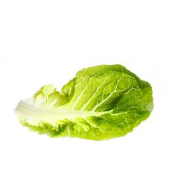 Salatblatt ausgebreitet