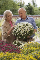 Senior couple shopping for flowers in garden centre, man holding pot plant