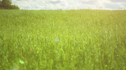 Green Field in Sunlight. HD 1080p.