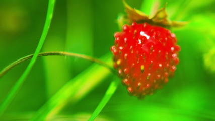 Beautiful Strawberry Close-up. DOF. HD 1080.