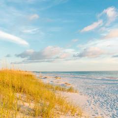 ocean beach with sand dunes