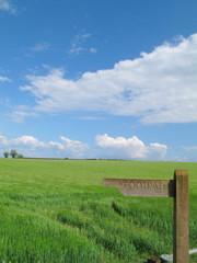 Barley field behind milepost marked ÒfootpathÓ