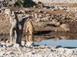 Löwen (Panthera leo) am Wasserloch