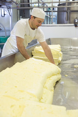 Cheese maker turning farmhouse cheddar curds