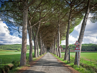Long Access Road with Trees in Italy (Tuscany)